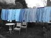 blueshirts2